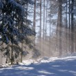 Sunbeam in forest at winter — Stok fotoğraf