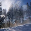 Sunbeam in forest at winter — Stock Photo #2803526