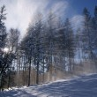 Sunbeam in forest at winter — Lizenzfreies Foto
