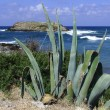 Cactus at then seaside — Stock Photo #2985768