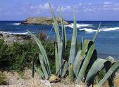 Kaktus v tehdejší seaside — Stock fotografie