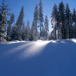 Stock Photo: Spruce and snow