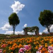 Stock Photo: Flowered field in Bad Dürkheim, Palatinate, Germany