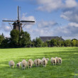 Wind mill in netherlands — Stock Photo