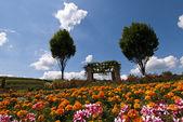 Flowered field in Bad Dürkheim, Palatinate, Germany — Stock Photo