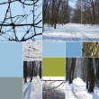 Collage of beautiful winter landscapes — Stock Photo