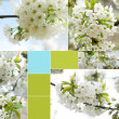 Collage of beautiful white spring flower — Stock Photo