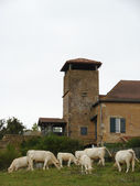 Old building with cows — Stock Photo