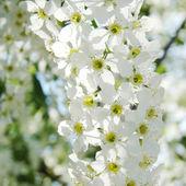 Beautiful spring flowers — Stock Photo