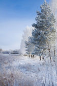 Russian cold winter — Stock Photo