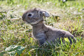 The little rabbit in the grass — Stock Photo