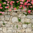 Picturesque stone wall — Foto Stock