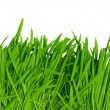 Green grass background, high resolution — Stock Photo #2933736