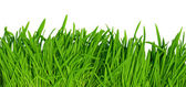 Green grass background, high resolution — Stock Photo