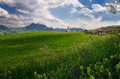 альпийский луг — Стоковое фото
