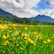 Grass and flowers in the Alpine meadow — Stock Photo