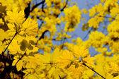 осень в парке — Стоковое фото