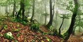 Misty forest — Stock Photo