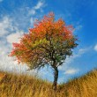 Lone tree in the fall time — Stock Photo