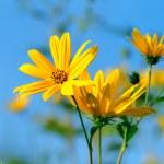 Псориаз - лечение травами и народными
