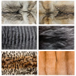 Closeup of beautiful fox wolf mink fur — Stock Photo