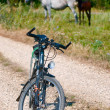 Bicycle and horses — Stock Photo