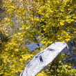 Umbrella and autumn leaves on background — Stockfoto