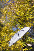 Umbrella and autumn leaves on background — Stock Photo
