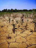 Dry earth — Stock Photo