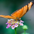 Julia Butterfly or Julia Heliconian — Stock Photo #2832392