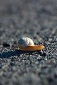 Gastropods (Gastropoda) — Stock Photo