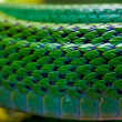 Red-tailed Green Ratsnake — Stock Photo