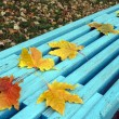 Autumn maple leaves on bench — Stock Photo