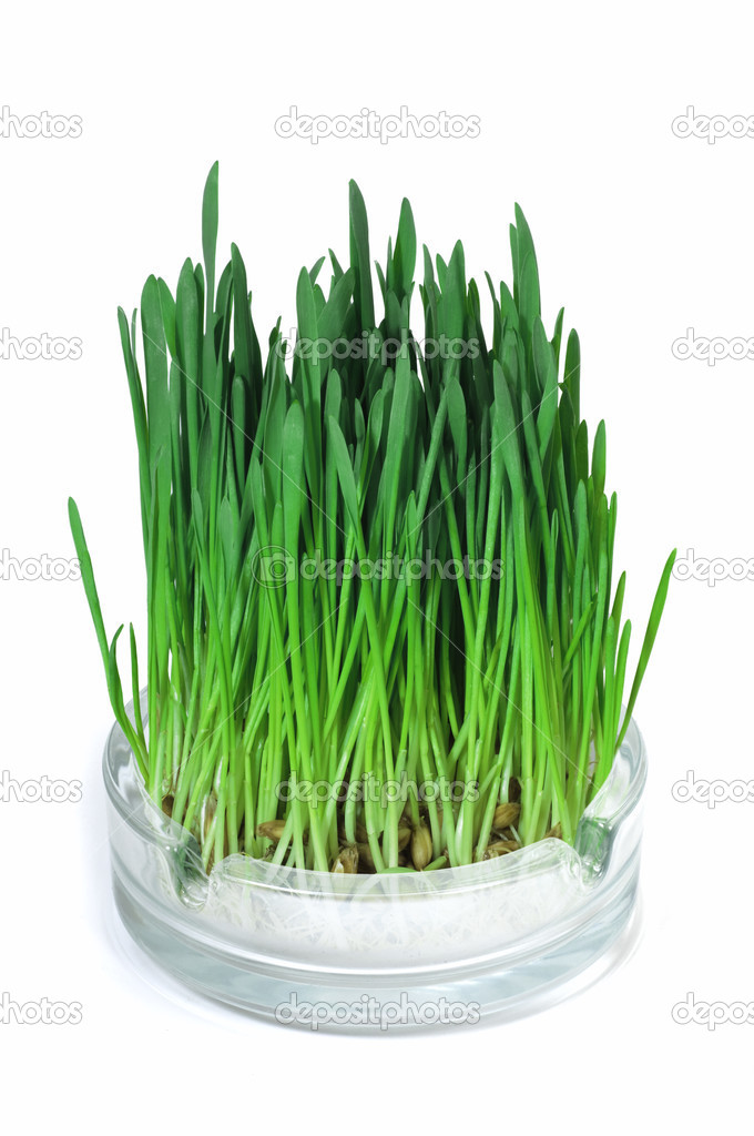 Green grass growing in the ashtray. It symbolizes not smoking tobacco and cigarettes. — Stock Photo #2946404