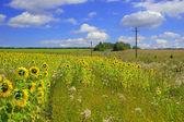 Un bellissimo campo di fiore — Foto Stock