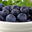 Blueberries in a White Bowl - Stockfoto