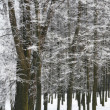 Winter hoar-frost trees — Stock Photo