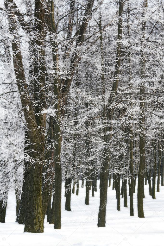 Winter hoar-frost trees park snow white — Stock Photo #2766097