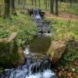 Stock Photo: Forest source water