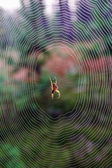 Spider indian summer — Stock Photo