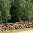 Forest logs — Stock Photo #2798634