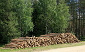 Forest logs — Stock Photo