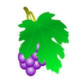 Grape — Stock Vector