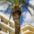 Stock Photo: Hotels and palm