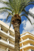 Hotels and palm — Stock Photo