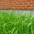 Green grass and red brick wall — Stock Photo