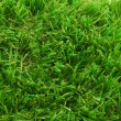 Artificial  grass turf background - Stock Photo