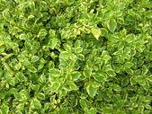 両掛けの植物 — ストック写真