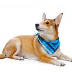 Dog — Stock Photo #2901420