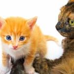 Ma with kitten — Stock Photo